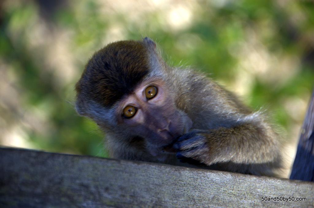 Bako in Borneo1